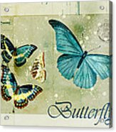 Blue Butterfly - S55c01 Acrylic Print by Variance Collections