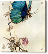 Blue Butterfly Acrylic Print by Warwick Goble