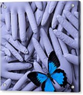 Blue Butterfly With Gary Hands Acrylic Print by Garry Gay