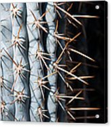 Blue Cactus Acrylic Print
