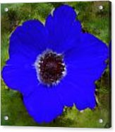 Blue Calanit Magen Acrylic Print