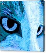 Blue Cat Face Acrylic Print