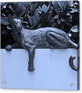 Blue Cat Acrylic Print by Rob Hans