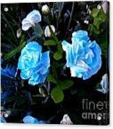 Blue Carnations Acrylic Print