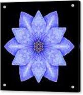 Blue Clematis Flower Mandala Acrylic Print