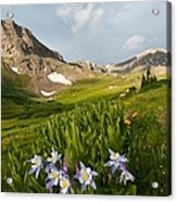 Handie's Peak And Blue Columbine On A Summer Morning Acrylic Print
