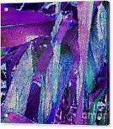 Blue Corn Acrylic Print