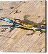 Blue Crab On Dock Assateague Island Md Acrylic Print