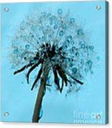 Blue Dandelion Wish Acrylic Print
