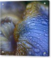Blue Danube  Acrylic Print