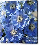 Blue Delphinium 9656 Acrylic Print