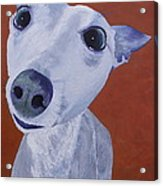 Blue Dog Acrylic Print