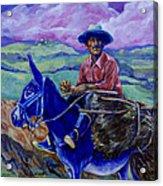 Blue Donkey Acrylic Print