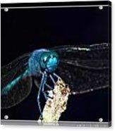 Blue Dragon Acrylic Print