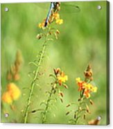 Blue Dragonfly In The Flower Garden Acrylic Print
