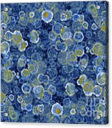 Blue Drip Acrylic Print by Frank Tschakert