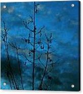 Blue Dusk Acrylic Print