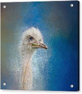 Blue Eyed Beauty - White Ostrich - Wildlife Acrylic Print