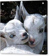 Blue-eyed Twins Acrylic Print