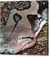 Blue Eyes Snake Acrylic Print