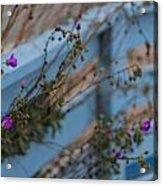 Blue Fence Purple Flowers Acrylic Print