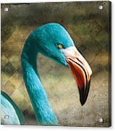 Blue Flamingo Acrylic Print