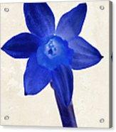 Blue Flower Beige Texture Acrylic Print