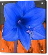 Blue Flower In The Fall At Night Acrylic Print