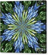 Blue Flower Star Acrylic Print by Annette Allman