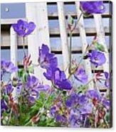 Blue Flowers Acrylic Print