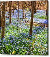 Blue Flowers In Spring Forest Acrylic Print by Elena Elisseeva