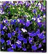Blue Flowers On Sun Acrylic Print