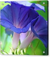 Blue Flutes Acrylic Print