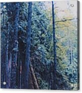 Blue Forest By Jrr Acrylic Print