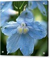 Blue Fragil Acrylic Print