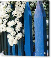 Blue Garden Fence With White Flowers Acrylic Print