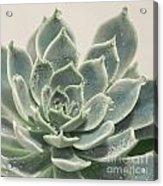 Blue Green Succulent Acrylic Print