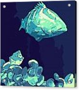 Blue Grouper Acrylic Print
