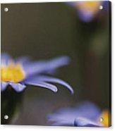 Blue Haze II Acrylic Print