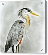 Blue Heron 3 Acrylic Print