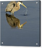 Blue Heron   #7783 Acrylic Print