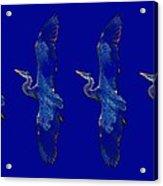 Blue Heron Ballet Acrylic Print