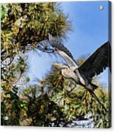 Blue Heron In The Trees Oil Acrylic Print