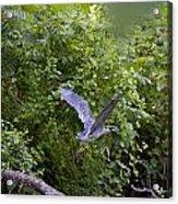 Blue Heron Journey I Acrylic Print
