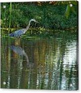 Blue Heron Magic Acrylic Print