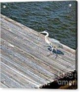 Blue Heron On Dock Acrylic Print