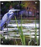 Blue Heron On The Bay Acrylic Print