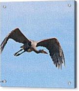 Blue Herons Last Fly By Acrylic Print