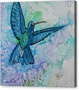 Blue Hummingbird In Flight Acrylic Print by M C Sturman