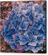 Blue Hydrangea Thank You Acrylic Print